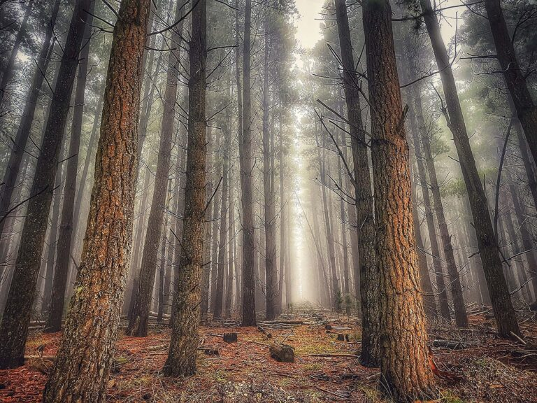 06_Forest